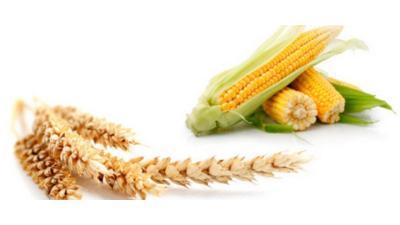 البنك المركزي: تراجع في واردات مصر من القمح والذرة والأدوية