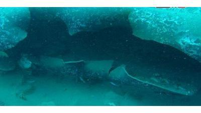 سانا: استهداف مرابط النفط البحرية السورية في ضربة إرهابية